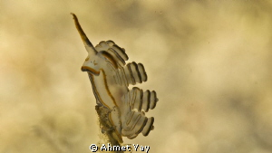 Oleeeeeeey....:)